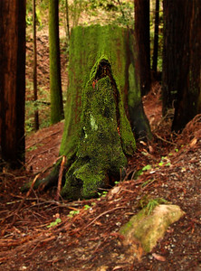 IMG_2450 Moss Stump Man