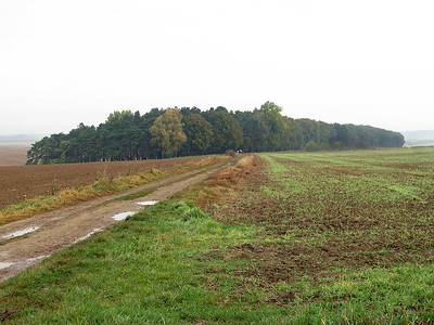 The view looking north from Serre Road Cemetery No. 3. The British Front line ran roughly to the left of the track. The wood in the background was originally 4 small copse at the time of the battle, they have now merged into one single wood known as Sheffield Memorial Park.