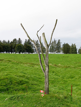 Known as Danger Tree, the remains of an original tree where casualties were at there highest in the battle with men trying to reach the small amount of high ground for cover. Newfoundland Park.