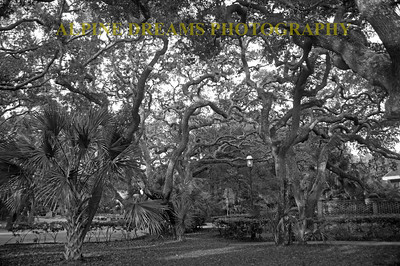 TWISTED TREES IN BLACK & WHITE