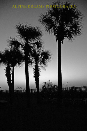 PALM-TREES-BW