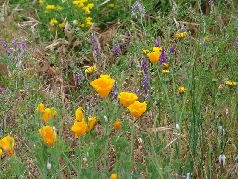 WILDFLOWERS NEAR GRANTS PASS