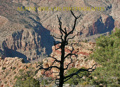 Dead-Tree-Canyon-View