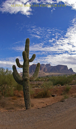 Cactus-Apache-Junction