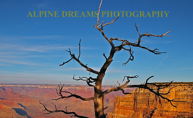 Tree-Canyon-View