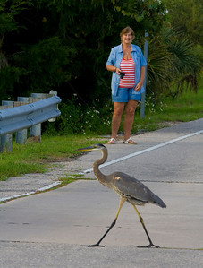 Friendly natives like this Blue Heron. He posed for several shots, then went fishing!