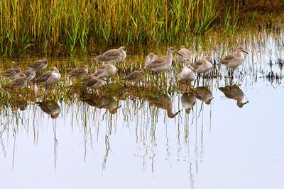Shore birds are plentyful in St Marks.
