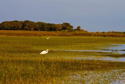 Beautiful golden marsh ponds.
