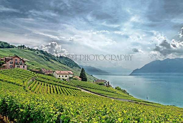 EPESSES VINEYARD, EPESSES, SWITZERLAND