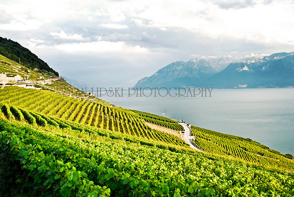 VINEYARD-EPESSES, SWITZERLAND