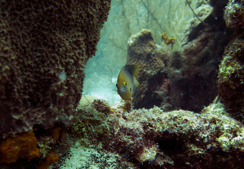 An expressive angelfish