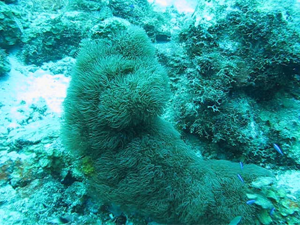 Video - slice of life in a coral reef