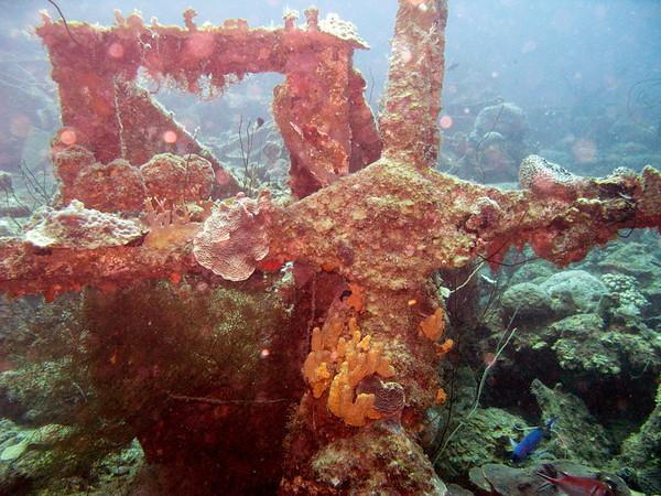 The car pile dive site