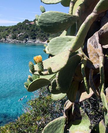 A flower on a cactus on a cactus