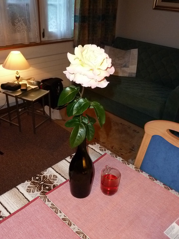 A welcomimg rose in our apartment, fresh from the garden.