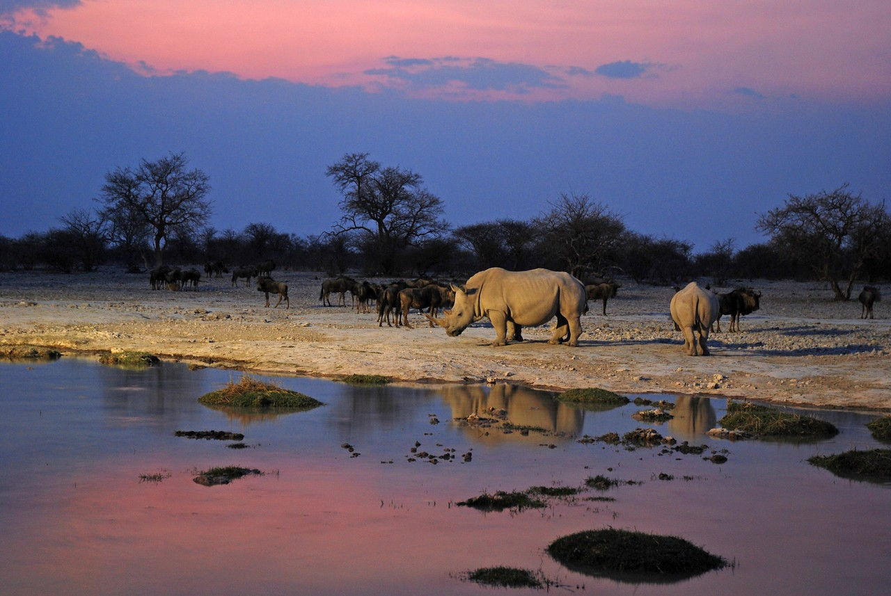 The waterhole at Edo's Camp near Ghanzi, Botswana at sunset - the best waterhole of the trip<br /> <br /> The waterhole at Edo's Camp in the northwest Kalahari of Botswana - the best waterhole of the trip. There was a steady stream of wildlife to the pan, including white rhino, kudu, giraffe, springbok, wildebeest, waterbuck, impala and eland. The waterhole, which is lit up at night, is a natural pan that fills each rainy season, and the camp pumps additional water into it during the drier, winter months. We sat next to the campfire under a lovely old leadwood tree and, from this idyllic spot, enjoyed a spectacular view of the waterhole and the wildlife that came to drink. The view from our tent, which was only 20m from the waterhole, was equally good, and we could lie on our beds during our midday siesta and watch the wildlife coming and going. An amazing waterhole!