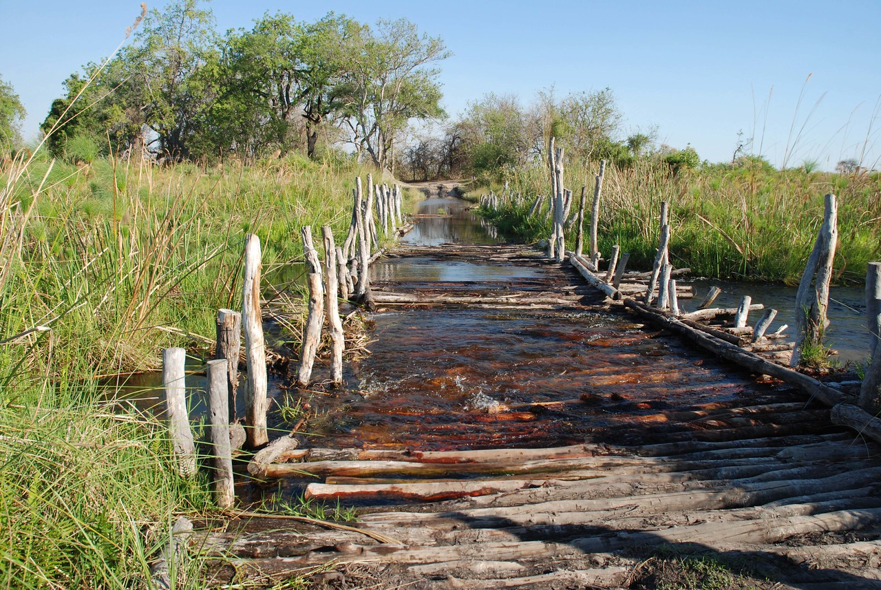 "Third Bridge in the Moremi Game Reserve, Botswana<br /> <br /> Crossing the bridges in the Moremi Game Reserve always added a little excitement to our day. The word ""bridge"" is perhaps a wee bit of an overstatement. The bridges are simple structures made of wooden poles strung loosely together in a somewhat haphazard fashion. They have alarming gaps and holes that, at times, threatened to swallow up our vehicle. The bridges rattled and shook alarmingly as we made our way gingerly across. Due to high water levels in the Okavango Delta, large sections of each bridge were underwater, making it impossible to see/avoid the hazardous sections that would occasionally cause the Land Rover to lurch alarmingly. Great fun!"