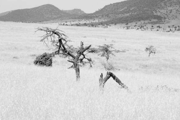 Safari Kenya 2013