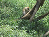 These Vervet Monkeys were more shy than the baboons.