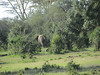 Our first elephant!  Not a great view as he wanders further into the woods.  We hope to see more later.