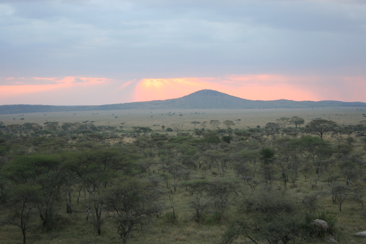Sunset in the Serengeti. Serengeti National Park, Tanzania, Africa.
