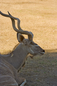 090713_0021_Safari_West_Santa_Rosa