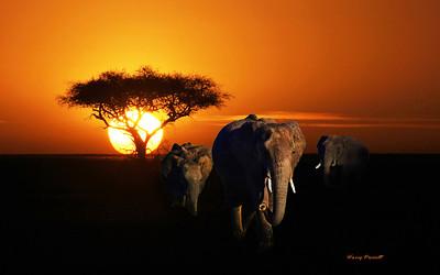 Safari in Tanzania - the animals & other wildlife