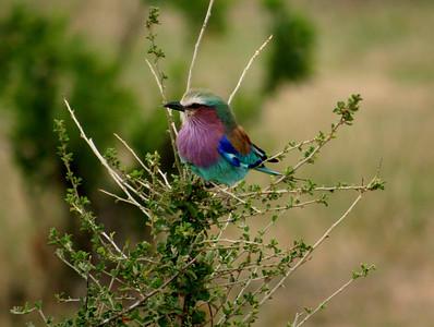 East African Safari September 2006 (Masai Mara National Park, Kenya)