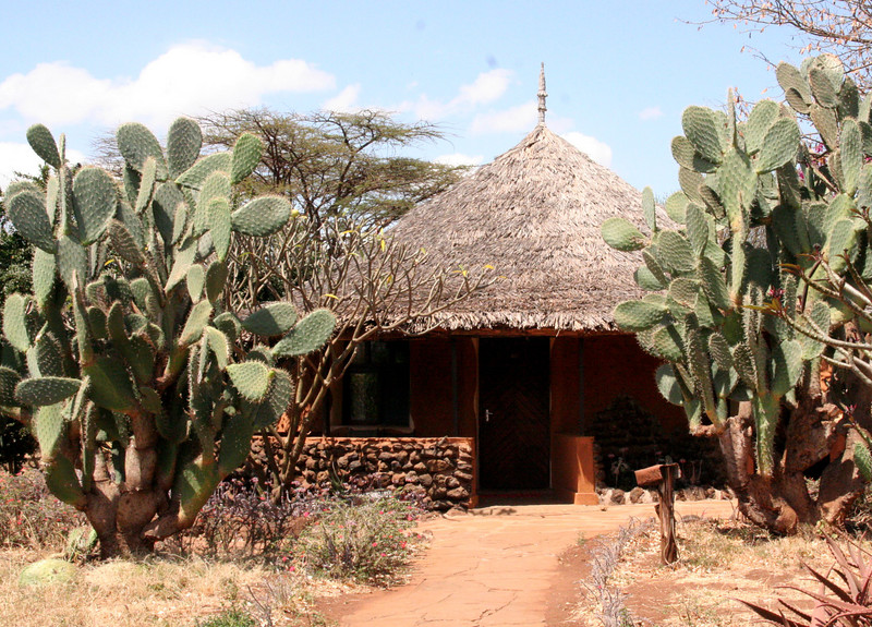 Lodge hut covered with thatched roof , equipped with ensuite facilities ( Amboseli Sopa ). This Sopa lodge is situated with the majestic Kilimajaro mountains as a backdrop. A wide variety of birds seen on the lodge grounds and the surrounding area.