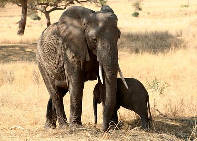 East African Safari September 2006 (Tarangire National Park, Tanzania)