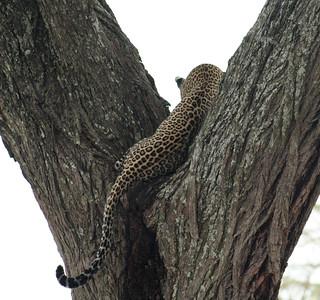 East African Safari September 2006 (Serengeti National Park, Tanzania)