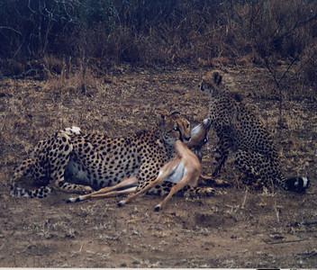Safari Septmber 2002 (Mala Mala, South Africa)