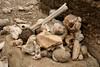 A pile of fossilised bones.