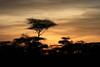 Sunset at Ndutu