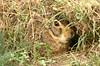 This wild rabbit was hiding under a bush near our room.