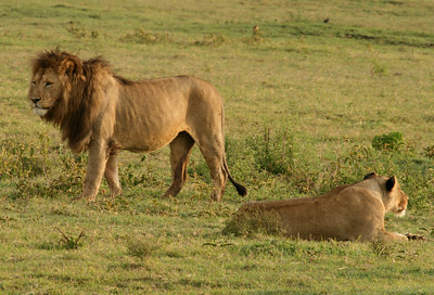 Safari in Tanzania Jan 2008 (Ngorongoro Crater)