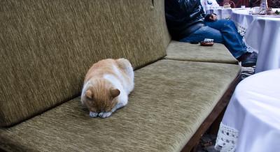 Sleeping cat at the coffee shop in Safranbolu