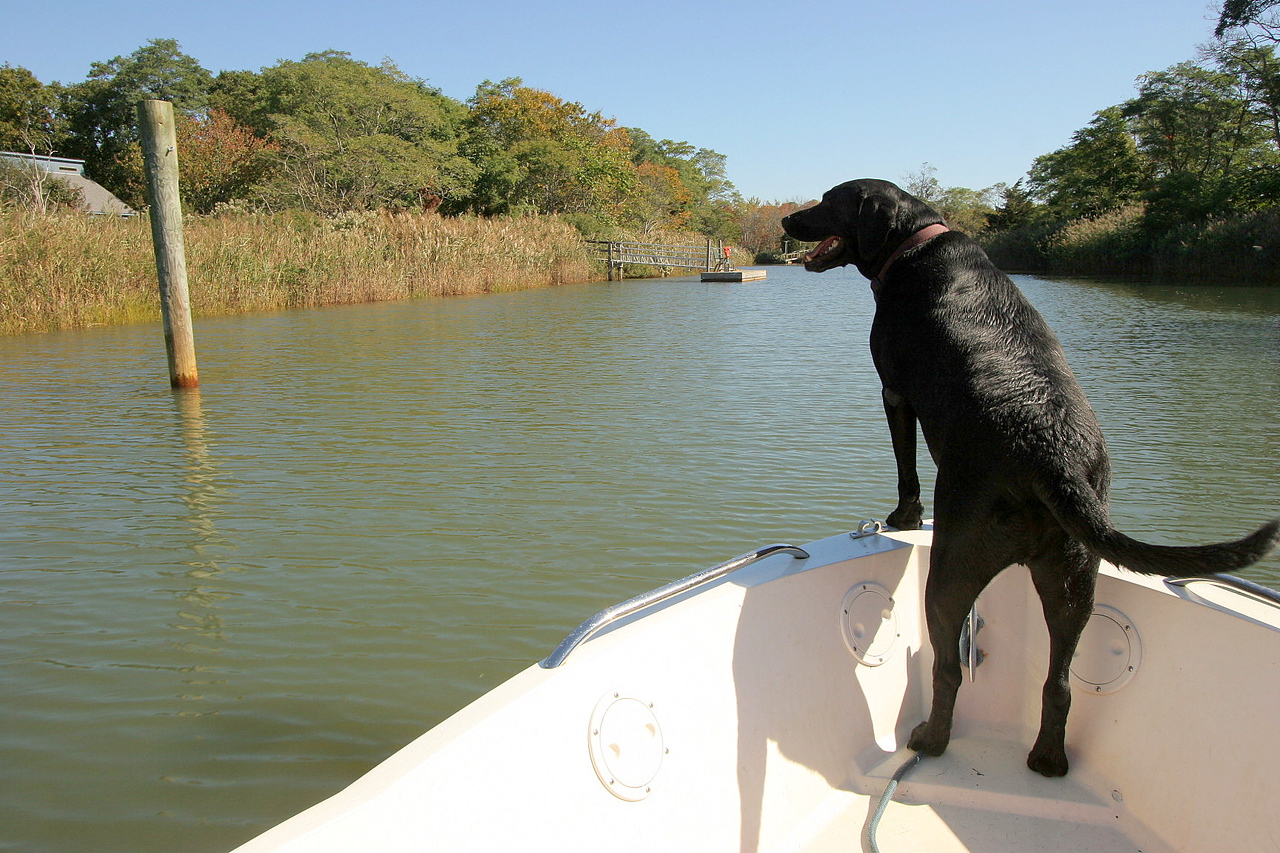 Diesel and I want to thank Jennifer and Michael for a incredible weekend out on the East End.<br /> <br /> Tim C. Smith