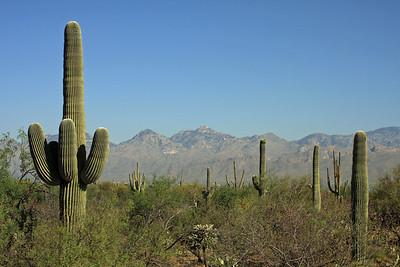 Saguaro NP 2008