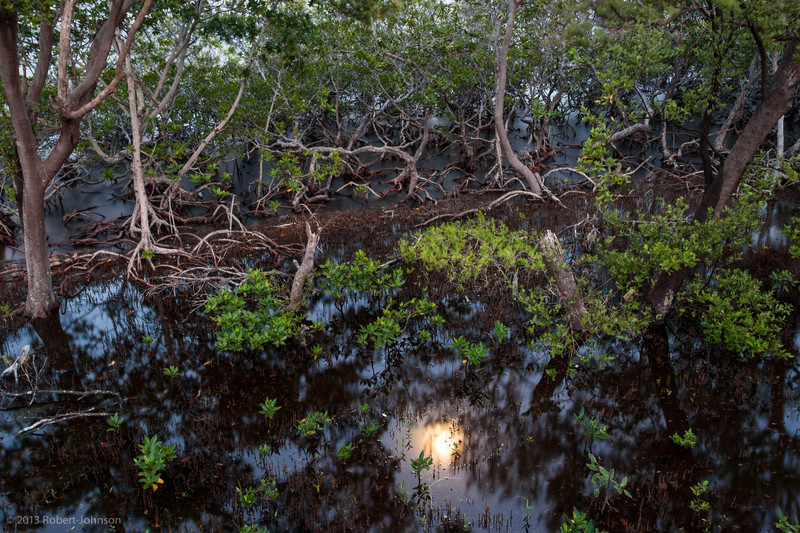 Moon over mangroves