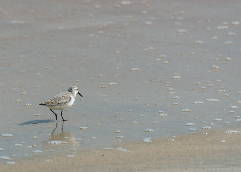 fine beach for birds
