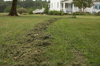 The grass clippings kind of reminded me of the dirt trail Bugs Bunny some times leaves.