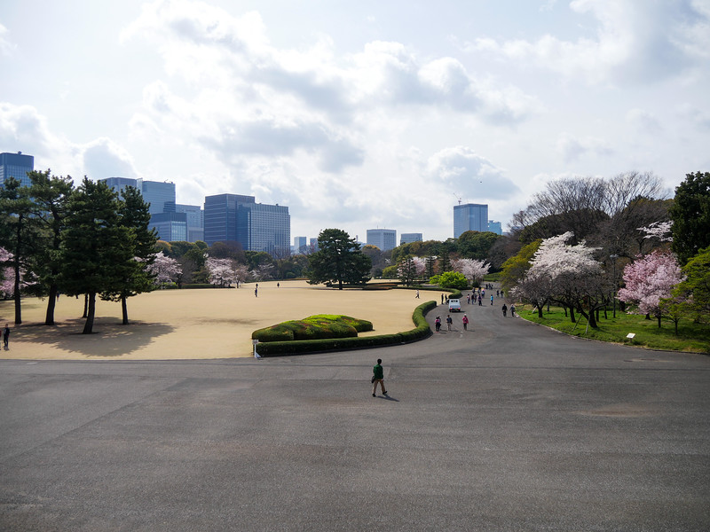 Cherry Blossoms at the Imperial Palace, 2017.