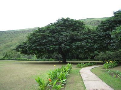 Gardens at Ayn Razak, Salalah, Oman