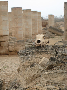The last resident of Al Baleed maybe?