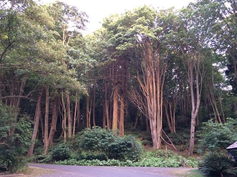 Magical light on the Madraona trees