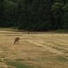 Oh! Deer!