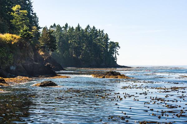 Lovely shoreline. Kelp everywhere!