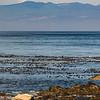 Cormorants and sea gull
