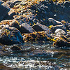 River otter relaxing on the beach
